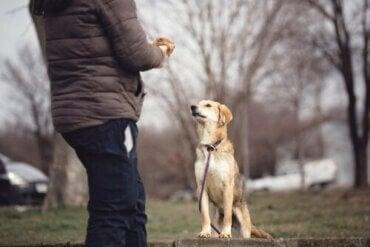 知っておきたい-犬の心理学