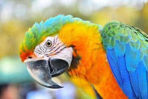【コンゴウインコ】カリスマ的な人気をもつ知能の高い鳥とは?