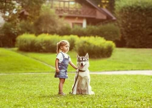 【動物が持つ方向感覚】犬は方向感覚に優れているの?