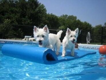 楽しい! ワンコと一緒の水遊び