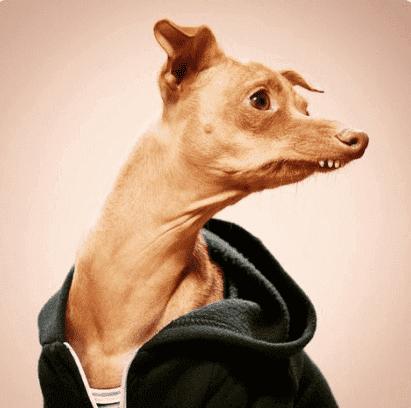 洋服を着た犬