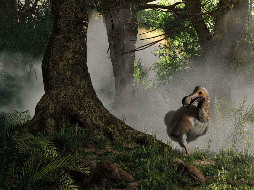 【絶滅種のシンボル】ドードー鳥が絶滅したのはなぜ?