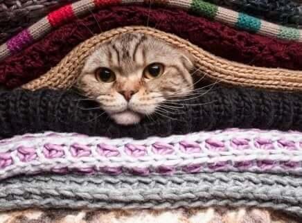 ブランケットの間の猫