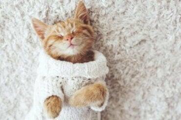 どうして猫は寒いのが苦手なの?