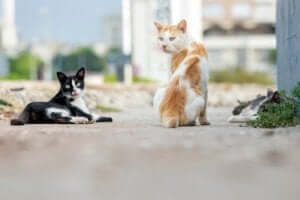国際猫の日