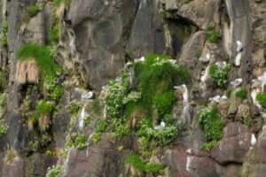 崖にある動物の巣 動物行動学者