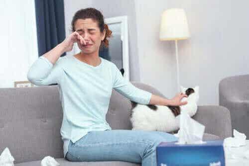 猫アレルギーに悩む飼い主さんの12の対策