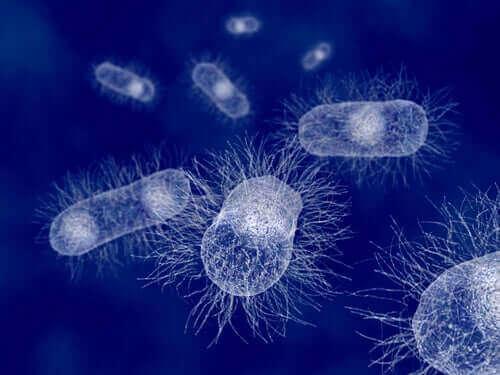 大腸菌:哺乳類の持つバクテリア