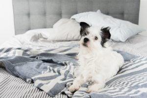 Hund i sengen