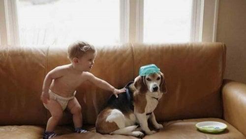 Et barn skriver et brev til sin avdøde hund og får et svar