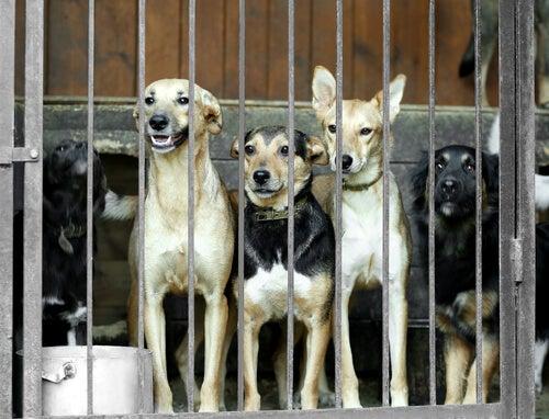 Sør-Korea avslutter det største hundekjøttmarkedet