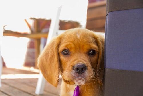 10 ting du ikke bør gjøre hvis du respekterer hunder