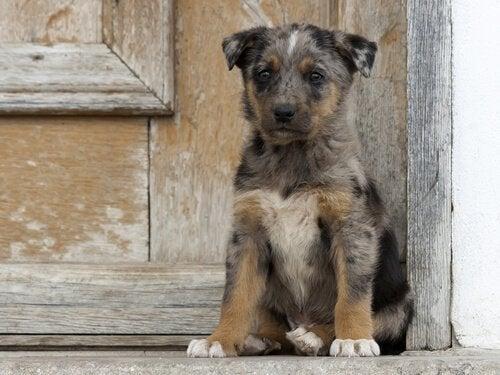 Bli en helt for et forlatt dyr: Trinnene du bør ta