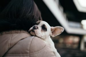 adopter en ny hund
