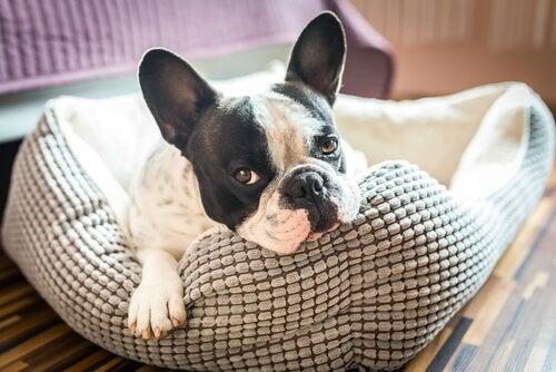 Hund i senga si