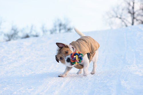 Hvorfor er det slik at hunder rister lekene sine?