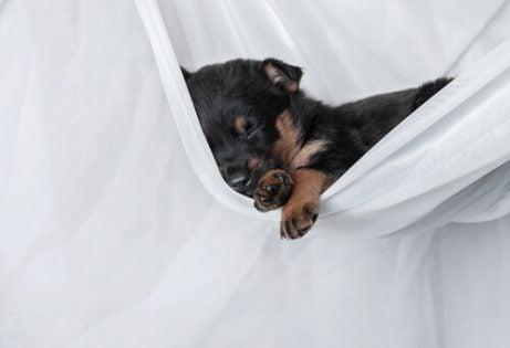 Hvorfor sover hunder dagen lang?