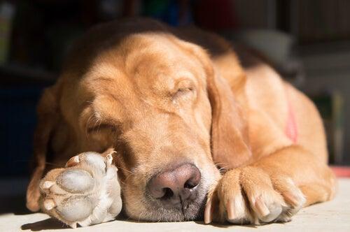 Hvordan tar hunder etter ulike sovestillinger?