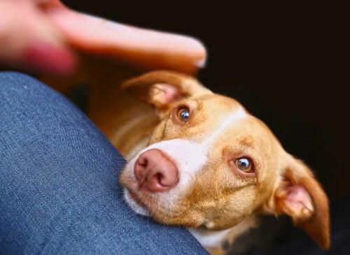 Hvordan kan du få hunden din til å slutte å tigge etter mat?