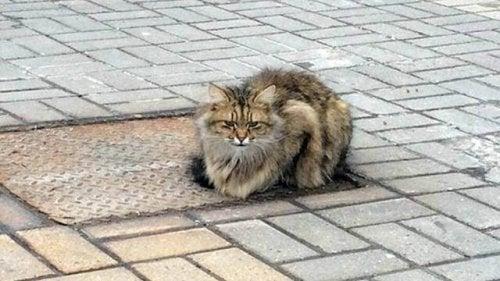 Forlatt katt venter på eieren i ett år