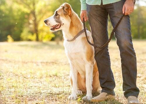 5 triks for å fjerne hundehår fra klærne dine