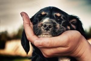Hund med øynene lukket