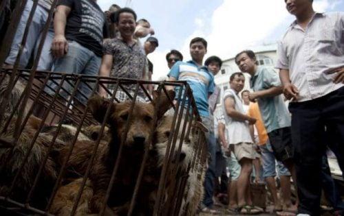 Hundekjøttfestivalen i Kina