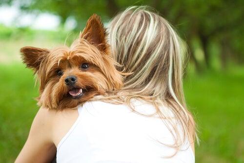 Slik vet du at hunden din elsker deg vilt