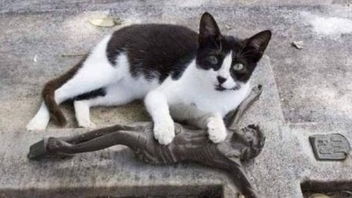Katten som besøker eierens grav daglig
