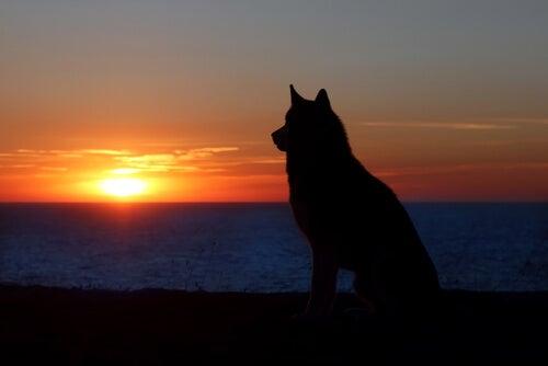 Sorg over kjæledyr: Det samme som å sørge over en person?