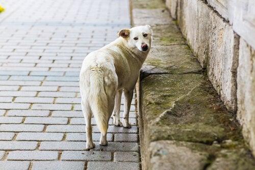 Selv om du forlater hunden vil den fortsette å elske deg