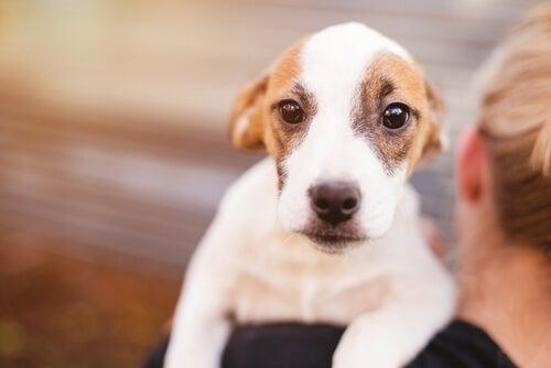 Behandling av oppkast hos hunder