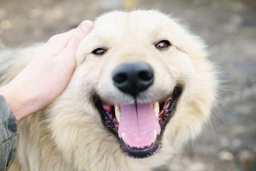 10 grunner til at jeg elsker hunden min