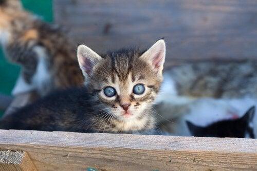 9 grunner til at du bør adoptere en katt