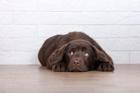 6 grunner til at du ikke bør straffe hunden din