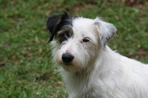 5 vanlige dempende signaler hos hunden