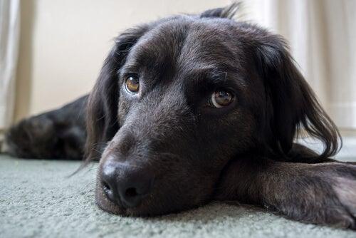 6 ting du tror hunden din liker, men som den hater!