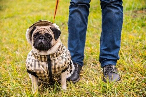 Aggresjon som følge av overbeskyttelse av hunder