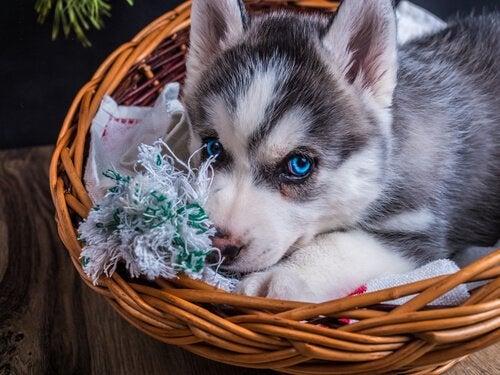 5 knep for å rengjøre senga til hunden din