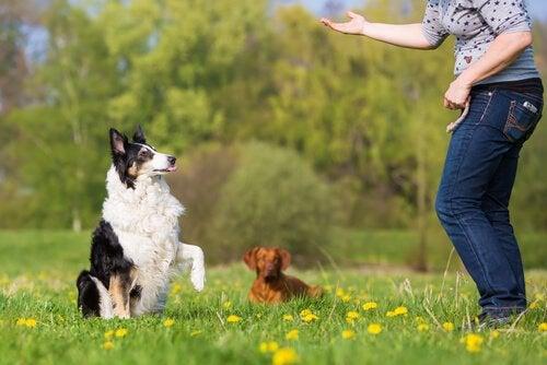 Grunnleggende lydighetsøvelser for hunden din