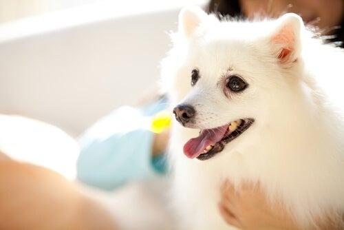 Husk: Du har en hund, ikke en baby