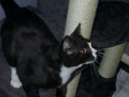 Moon Unit: Katten som forsvant i London, og dukket opp i Paris 8 år senere