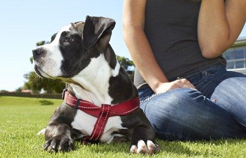 Å ha hund forbedrer din følelsesmessige og fysiske helse