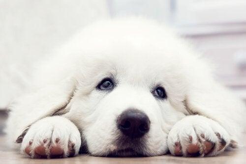 Denne kortfilmen viser hva en hund vil gjøre for å bli adoptert