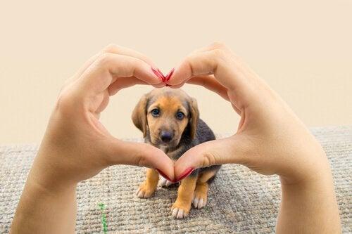Alt hunden din vil er å gi deg sitt hjerte