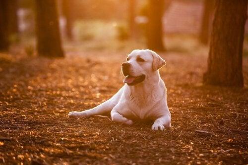 8 ting du burde lære av hunden din