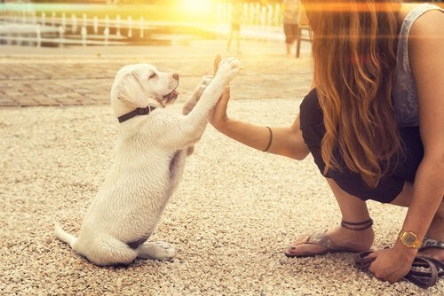 Kan en hund være venstrelabbet?
