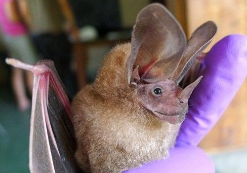 De rareste dyrene som finnes i dyreriket