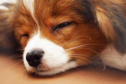 5 tips for å få hunden din til å sove gjennom hele natten