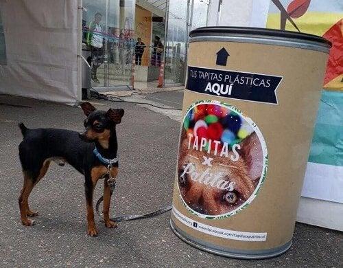 Hund står ved resirkuleringsbeholder